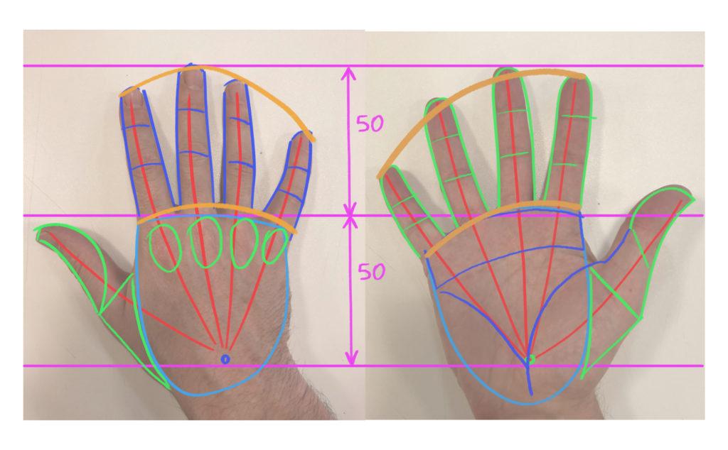 structure d'une main à plat